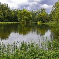 Москва. Ботанический сад РАН. :: kolin marsh