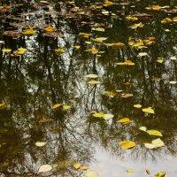 Прудик в ботаническом саду :: Светлана