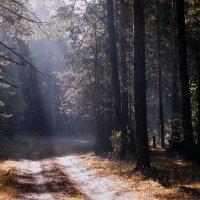 Вспоминая прошедшую осень (1)... :: Лесо-Вед (Баранов)