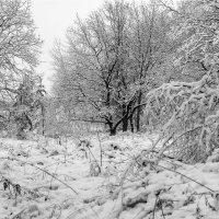 Пришла зима... :: Юрий Стародубцев