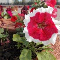 Цветок :: Nanaly Gold