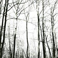 И  темнота редеющего леса..(вар. 2).... :: Валерия  Полещикова