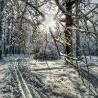 На лыжне в парке Сокольники. :: Василий Ярославцев