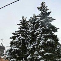 к зиме готовы! :: надежда