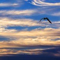 чайка :: Slava Hamamoto