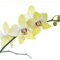 Орхидея.. :: Виталий Томский