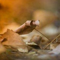 Осень в городе :: Светлана -