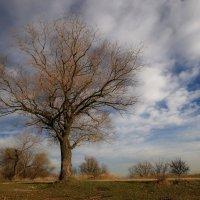 одинокое дерево :: Игорь Kуленко