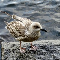 Чайка на заливе :: Светлана