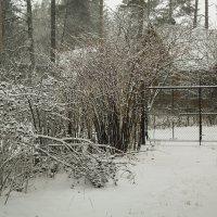 Снежок выпал :: Aнна Зарубина