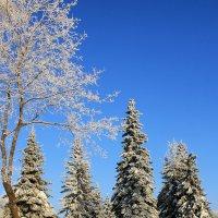 Зима :: Виктор Колмогоров