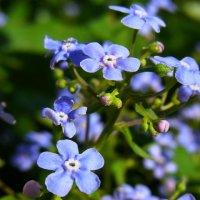 цветочки :: Tiana Ros