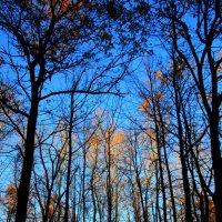 Последнее  солнышко  ноября.... :: Валерия  Полещикова