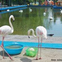 Фламинго и другие... :: Нина Бутко