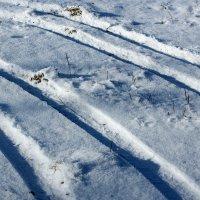 Следы на снегу :: Дмитрий Арсеньев