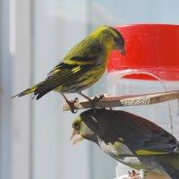 дуэт) :: linnud