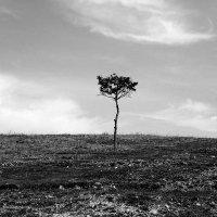 одиночество :: Катя Медведева