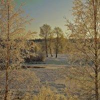 Три тополя на том берегу :: Виктор Бондаренко