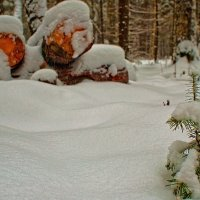 Маленькой Ёлочке холодно зимой... :: Владимир Хиль