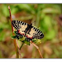 Бабочка :: Nikolay Volkov