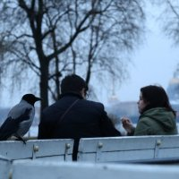 Ворона :: Катерина Якель
