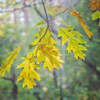 Осенний лист :: Владимир Самсонов