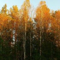 Осень в лучах заката. :: Николай Масляев