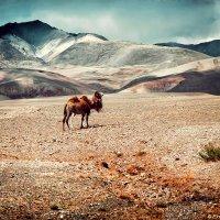 Марсианские пейзажи :: Елена Хохлова
