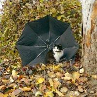 Кошка и осень :: Сергей Босов