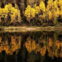 Осенние смотрины :: Сергей Чиняев
