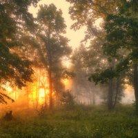 Тепло первого света... :: Roman Lunin
