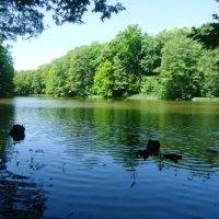 Озеро :: Сергей