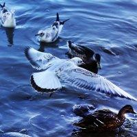 Статные жители Петергофа на Финском заливе :: Анастасия Олишенко