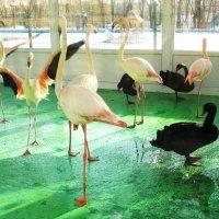 В зимнем помещении птичника :: Нина Бутко