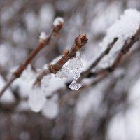 Кристальный снег :: Andy Bayt