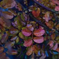 Осени прекрасное очарование... :: Ксения Довгопол