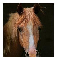 Портрет коня :: Nikolay Volkov