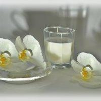 Белое и белое :: Наталия Лыкова
