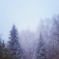 Зимнее утро :: Вера Кораблёва