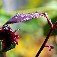 дождь идет... :: Александр Корчемный