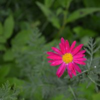 Лето 2015 :: Елизавета Голенок