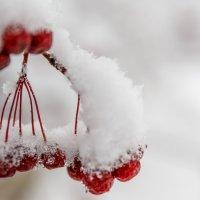 winter waited, waited nature - the snow fell :: Дмитрий Карышев