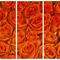 розы :: Алексей Карташев