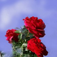 ...цветы  прошедшего  лета :: георгий  петькун
