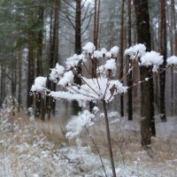 белый цветок :: Александр Прокудин