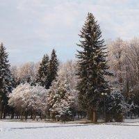 Зимняя картинка. :: Larisa Ereshchenko