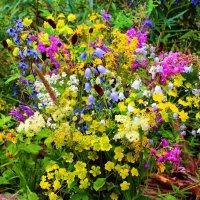 Цветы таёжных полян :: Сергей Чиняев