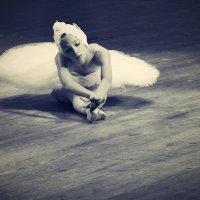 Лебедь (Сен-Санс) :: Gamza ..