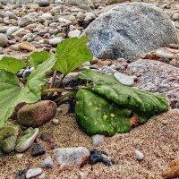 Песок, камни, листья :: Владимир Самсонов