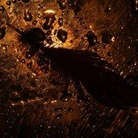 Созвездие  Феникса :: Ирина Сивовол